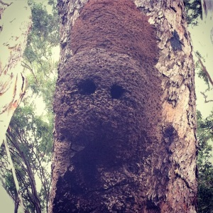 Old termite mounds repurposed by birds to nest in.
